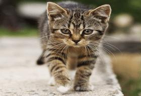 Fotos con Gatos